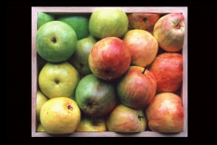 Miscellaneous - Fruit Boxes